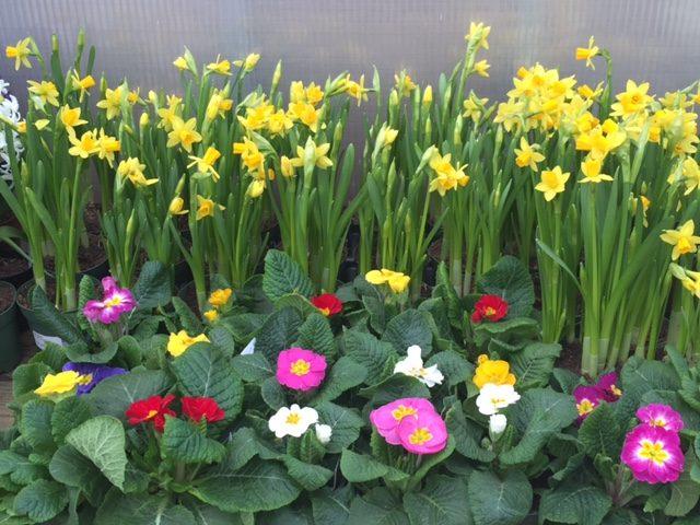 springblooms-7685310