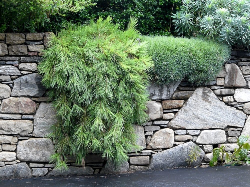 landscape-patios-stone-wall-groundcovers-2773662