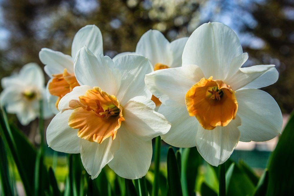blossom-1329557_1920-7719456