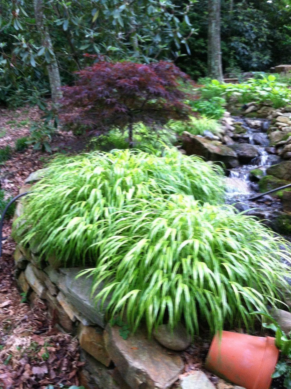 japaneseforestgrasswithjapanesemapleatchrisstonehouse-1421334