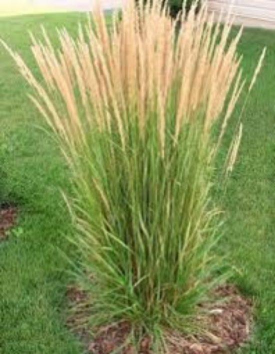 karlforestergrass-7219088