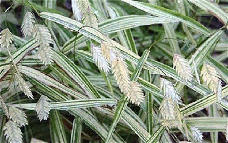 northernseaoats-6487474
