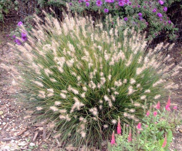 pigletgrass-4981119