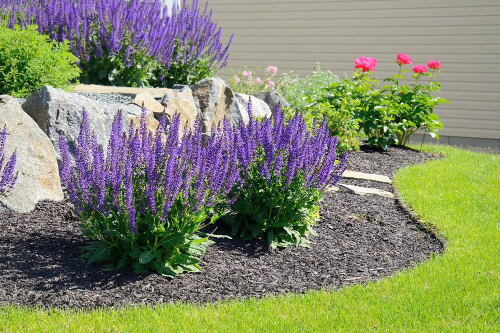salvia-flowers-and-rock-retaining-wall