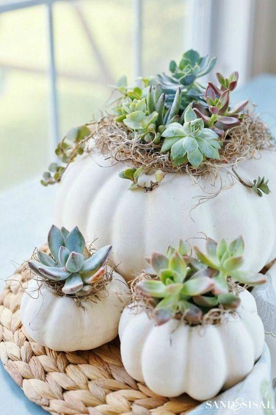 succulentpumpkins-2217337